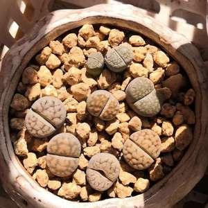 湘潭义乌买的,15一盆,7CM黑方,分开种了3盆。