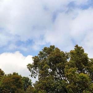 今天的云好看