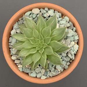 Repotted in a more gritty succulent mix.