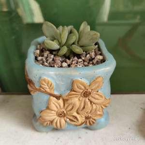 """我新添加了一棵""""不知名蓝盆黄花""""到我的""""花园"""""""