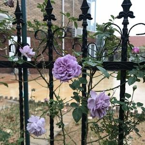 栅栏上的秋花。