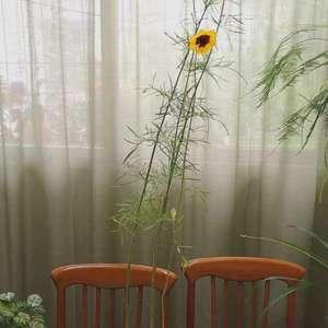 就开几朵小花,你至于这么高调么,快长成甘蔗了