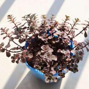 """我新添加了一棵""""小球玫瑰""""到我的""""花园"""""""