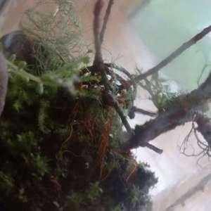 First terrarium I've put together since my car wreck ❤