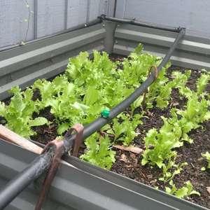 a我的菜园 vegetables