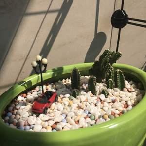 """我新添加了一棵""""万重山""""到我的""""花园"""""""