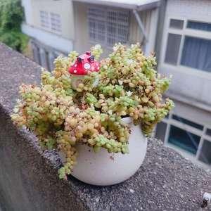 這一年因家中事而忽略了它 依然活的好好 只是葉子沒有像初時般翠綠