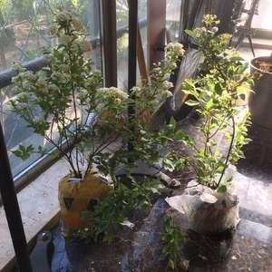 """我新添加了一棵""""绣线菊""""到我的""""花园"""""""