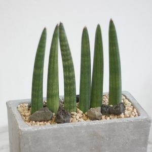 """제가 새로운 식물 """"투투키""""한 그루를 나의 """"화원""""에 옴겼어요."""