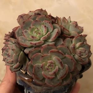 劳伦斯191219(5)多肉植物