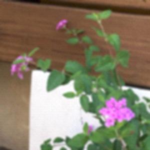 今天發現又開花了, 但是是本來長的比較不好的那棵