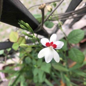 从3月开到现在的小花🌸 大多都结了种子
