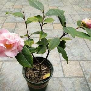今春的第一朵花,香气袭人