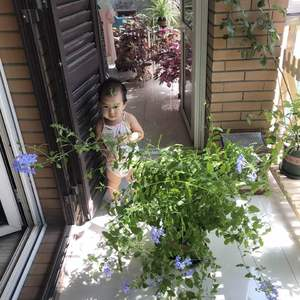 有点群开的效果了~从花架上搬了下来,让它疏松疏松筋骨~ 本来想换长支架整体绑扎一下的,结果小公举前来捣乱,计划失败……