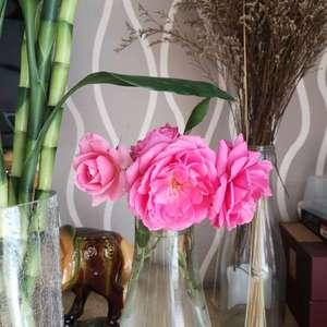 一共6朵花