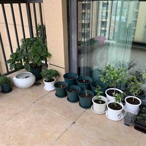 金球桂也搬到东阳台去了,现在所有植物,除了四种绿植:发财树、竹子、绿箩、吊兰,其余所有植物都在东阳台度夏了