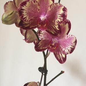 钟爱复古色的花~为了拍照透明胶纸都使上了😂强行复活!