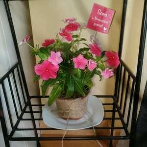 I Nuevo agregado un Planta bonita en mi jardín