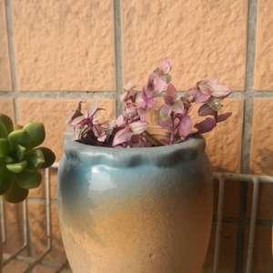 """我新添加了一棵""""紫""""到我的""""花园"""""""