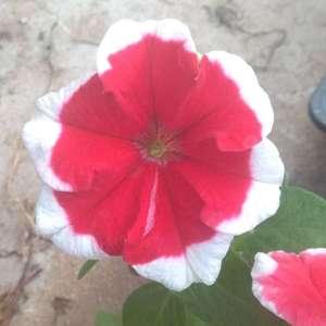随机一照,都好看。我家开花的花太少了