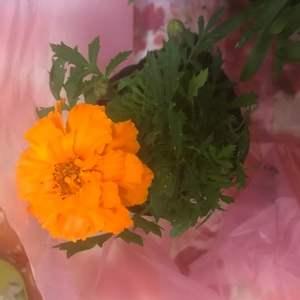 """我新添加了一棵""""萬壽菊""""到我的""""花園""""。"""