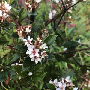 哇! 種了三年的實生苗今年終於開花了 花市買的一如既往花開得多   #為武漢肺炎祈福