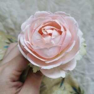 无限公主的第二朵花,比初花小不少但是更好看