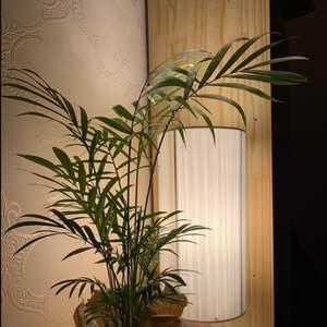 """제가 새로운 식물 """"테이블야자""""한 그루를 나의 """"화원""""에 옴겼어요."""