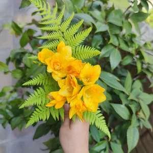 今年的花色开得好齐全呀~明年入手橙色的吧
