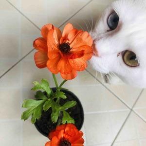 两朵小花开的正好!还是逃不过咕咕呵呵魔爪