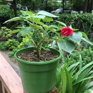 """我新添加了一棵""""水梅花""""到我的""""花园"""""""