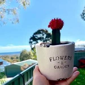 """我新添加了一棵""""Sun Succulent""""到我的""""花园"""""""