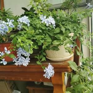 阳台上唯一的花