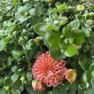 花都满满开拉   今年秋天也能有花花看了