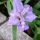 花在雨中斜