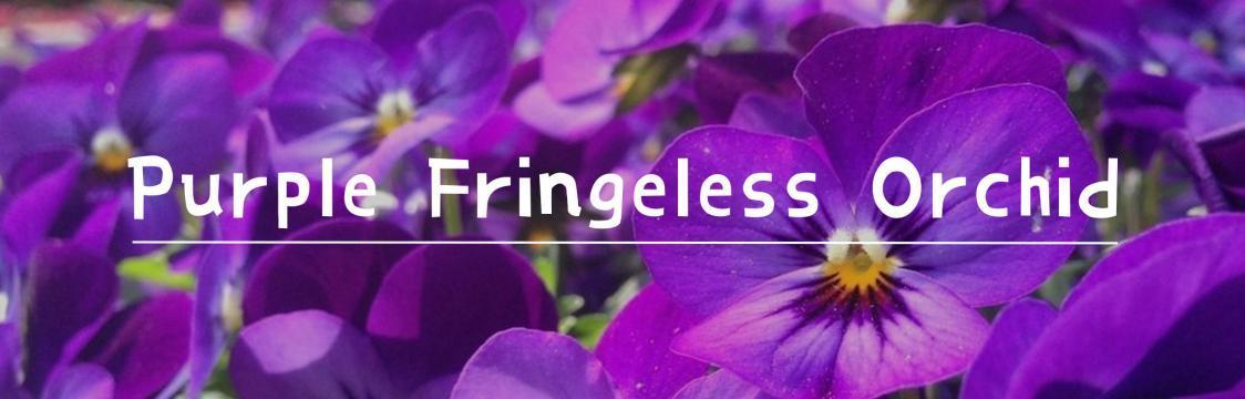 Purple Fringeless Orchid